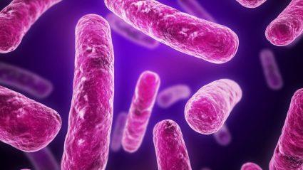 Bakteria patogenoa