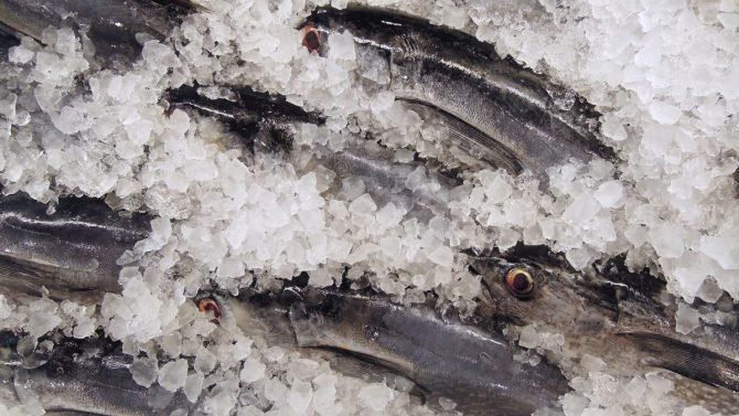Comer pescado